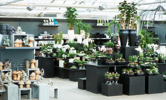 Création art floral Aix Les-Milles