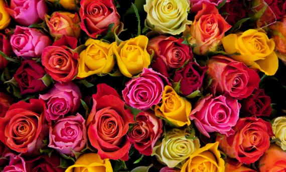 Les fleurs et les plantes Aix Les-Milles