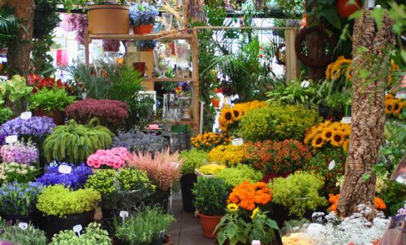 Artisans fleuristes Aix les-Milles