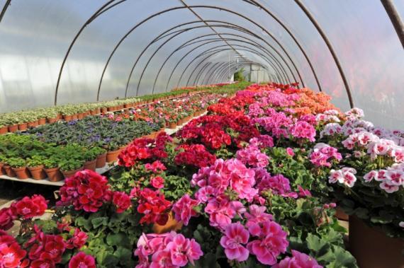 Fleuriste occasion spéciale Aix Les-Milles